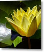 Water Lily Fc  Metal Print by Diana Douglass