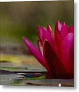 Water Lily - Id 16235-220248-4550 Metal Print