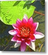 Water Lily In Pond Metal Print