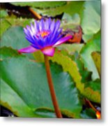 Water Lily In Tahiti Metal Print