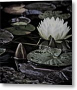 Water Lily Iv Metal Print