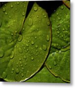 Water Lily Leaf Metal Print by Chaza Abou El Khair