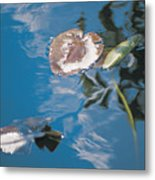 Water Lily Leaves And Reflection Of Clouds In Unknown Lake Metal Print
