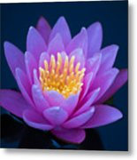 Water Lily Of The Dawn Metal Print