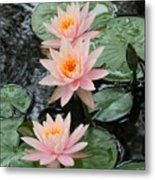 Water Lily Trio Metal Print