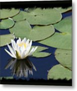 Water Lily With Black Border Metal Print