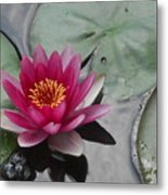 Water Lily With Bubbles Metal Print