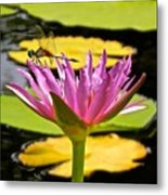 Water Lily With Dragonfly Metal Print