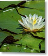 Water Lily With Friend Metal Print