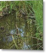 Water Pond Reflection In Peters Canyon Metal Print