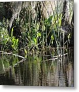 Water Reeds And Spanish Moss Metal Print