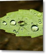 Water Strider Has A Drink At The Floating Leaf Cafe Metal Print
