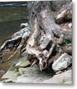 Water Tree Roots Metal Print by Carla Russell