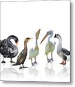 Waterbirds Metal Print