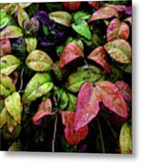Watercolor Colorful Leaves After A Shower 1771 W_2 Metal Print