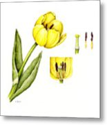 Watercolor Flower Yellow Tulip Metal Print