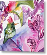 Watercolor - Frilled Coquette Hummingbird With Colorful Background Metal Print