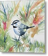 Watercolor - Mountain Chickadee And Pine Metal Print