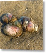 Watercolored Seashells Metal Print