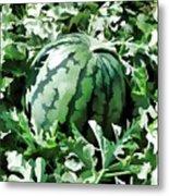 Waterelons In A Vegetable Garden Metal Print