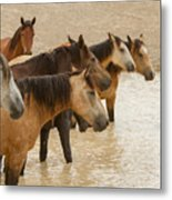 Waterhole Band Metal Print