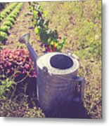 Watering Can In A Farm Field Metal Print