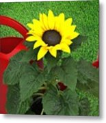 Watering With Sunflower Metal Print