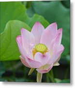 Waterlily Blossom With Seed Pod Metal Print