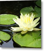 Waterlily In Yellow Metal Print
