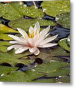 Waterlily On The Water Metal Print