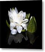 Waterlily  Reflection Metal Print