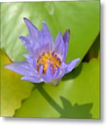 Waterlily Shadow Of Perfection Metal Print