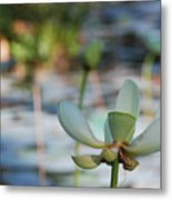 Waterlily Wash Horizontal Metal Print
