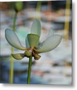 Waterlily Wash  Vertical Metal Print