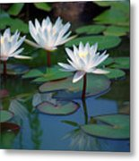 Waterlilys Metal Print