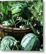 Watermelon In A Vegetable Garden Metal Print by Lanjee Chee