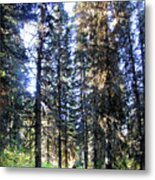Waterton Valley Trail Detail - Glacier National Park Metal Print