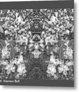 Waxleaf Privet Blooms In Black And White Abstract Poster Metal Print