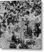 Waxleaf Privet Blooms On A Sunny Day In Black And White - Color Invert Metal Print
