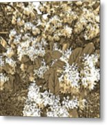 Waxleaf Privet Blooms On A Sunny Day In Sepia Tones Metal Print