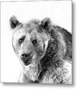 Wb Portrait Of A Bear Metal Print