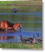 We Are All Friends Here. Metal Print
