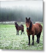 We Are Cold Metal Print