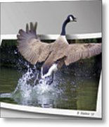 We Have Liftoff Metal Print