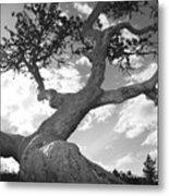 Weather Beaten Pine Tree And Sun - Monochrome Metal Print