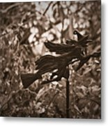 Weather Vane Metal Print