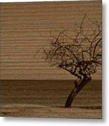Weatherd Beach Tree Metal Print