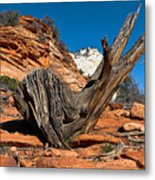 Weathered Check Metal Print