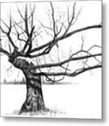 Weathered Old Tree Metal Print