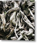 Weathered Roots - Sitka Spruce Tree Hoh Rain Forest Olympic National Park Wa Metal Print by Christine Till